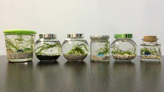 机におく小さな水族館「ボトルアクアリウム」