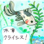 金魚に良い水草って何? ~金魚素人育成記3 ~
