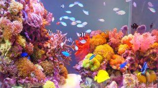 海水魚・淡水魚水槽の美しいレイアウト事例13選!