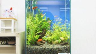 繁殖しやすい熱帯魚 ベスト3