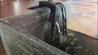 【汚い水槽がピカピカに!?】 水槽に付着した頑固な白い汚れの撃退法!