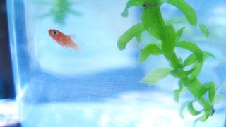 清涼感いっぱい!淡水魚のアクアリウム【まとめ】