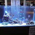 熱帯魚をおしゃれに見せる水槽レイアウト