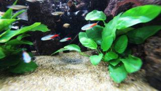 【塩浴】熱帯淡水魚の病気を治療する水槽