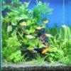 水草が育つ水槽照明 おすすめLEDライト ベスト3