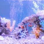 アクアリウム プロの水槽レイアウト事例をご紹介します【熱帯魚水槽編】