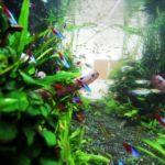 もう迷わない‼︎熱帯魚の組み合わせ‼︎