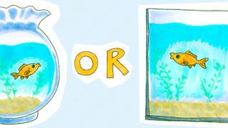 金魚を室内で育てる!飼育水槽の選び方
