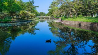 池の水ぜんぶ抜くメリット
