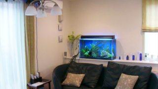 リビングに熱帯魚水槽を置こう!素敵な事例5つ 注意点5つ