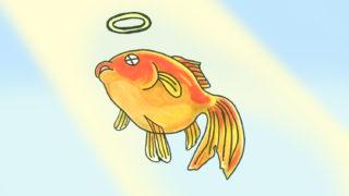 金魚 が 突然 死んだ! 原因と対策