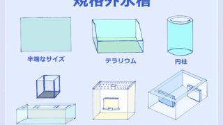 規格外サイズの水槽が欲しい! 買い方や注意点
