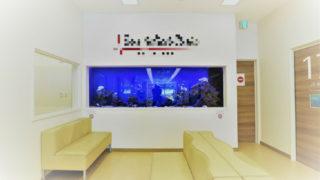 病院に熱帯魚水槽!! 素敵なアクアリウム7選 メリット5つ