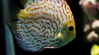 熱帯魚の病気について 種類と治療方法