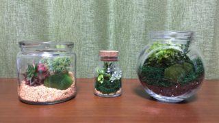 身近な森林を作る、コケリウムで緑あふれるお部屋に