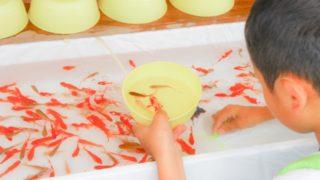 なぜ 金魚すくい の 金魚が続々と死んでしまうのか