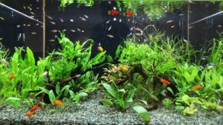 熱帯魚がすぐに死んでしまう 原因は?対策をしよう!