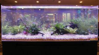 熱帯魚水槽の嫌な臭い 原因3つとその対策!