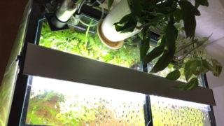 水草水槽には蛍光灯がおすすめ? LEDやメタハラと比較してみよう