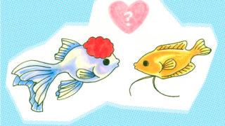 金魚と熱帯魚は一緒に飼える?