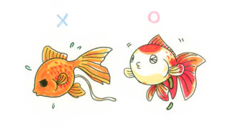 金魚のフンは健康の証! 良いフン・悪いフンとは