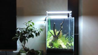 30センチ小型水槽で楽しむネイチャーアクアリウム水槽を作ってみました!