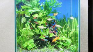 初めての熱帯魚 飼いやすい熱帯魚の種類
