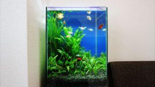 30センチ以下の水槽で飼える小型熱帯魚