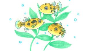 小さな熱帯魚「アベニー・パファー」の飼い方