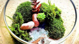 苔は簡単に育つ!栽培するのにお勧めな苔10選