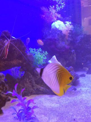 魚達も助け合って生きている