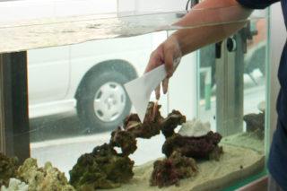 熱帯魚水槽に付いたコケをきっちり清掃するコツ! 掃除の手順を公開!