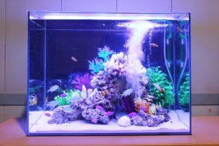 【初心者にも簡単】飼育しやすい海水魚ベスト3をご紹介します
