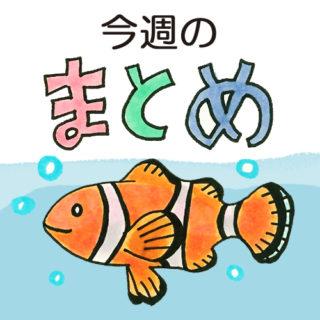 コケの生えにくい水槽とは~海水編~《2017年5月1日~5月7日》