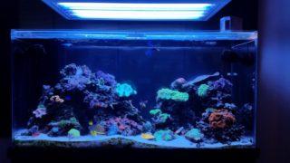 【まとめ】熱帯魚水槽の水質を浄化しよう!水質浄化のポイントとは