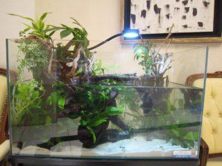 ワンランク上の水槽にするためには浮草を入れましょう
