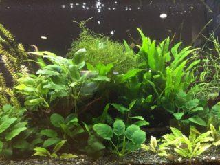 コケの生えにくい熱帯魚水槽を作ろう!~淡水編~