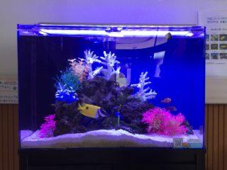 コケの生えない水槽とは!?海水魚水槽のコケを極力抑える方法をご紹介