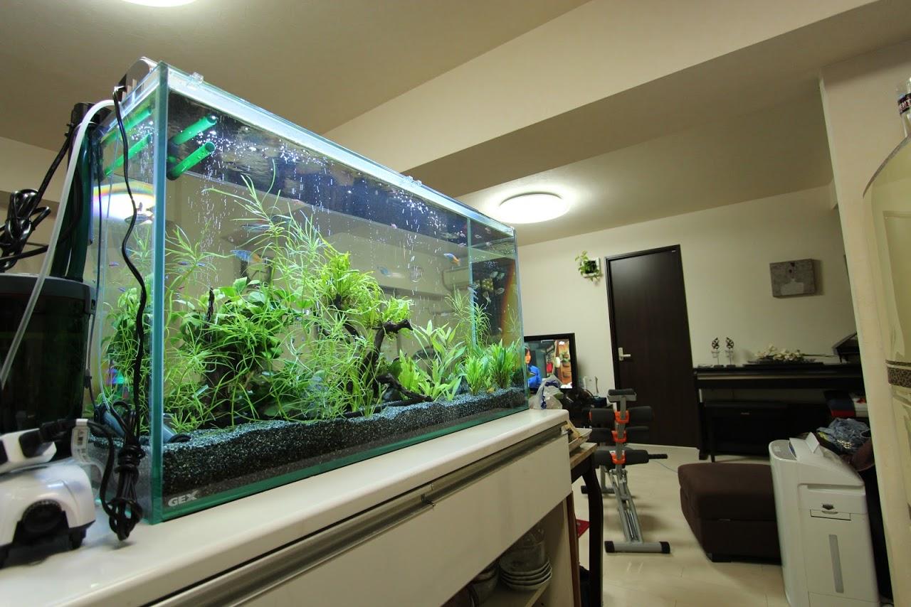 熱帯魚水槽のせいで部屋にカビが発生!?除湿は必 …
