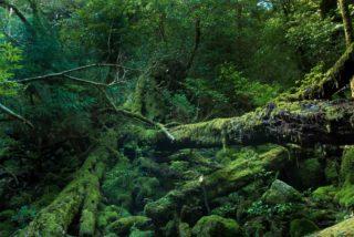 【写真で紹介】美しい苔(コケ)を利用したアクアテラリウムを作ろう