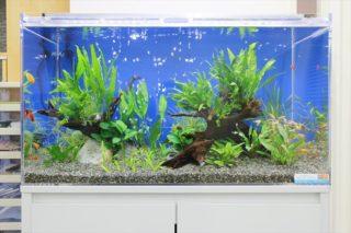 【プロ推薦】熱帯魚水槽の底に敷く、人気の底砂 ベスト3をご紹介
