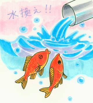 金魚 を 病気にさせない方法とは? 水換えが重要です!