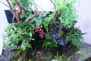 【初心者でもできる】アクアテラリウムでおすすめ 水上植物Best5