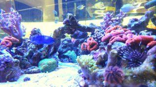 アクアリウムを綺麗に撮ろう! 熱帯魚水槽や魚の撮影方法!