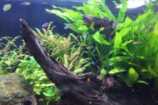 美しいアクアリウムレイアウトで水草を浮かせない植え方!