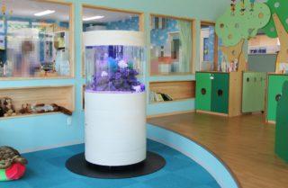 幼稚園や保育園に熱帯魚水槽!! 素敵な事例5台 メリット3つ