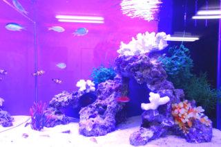 おすすめ!熱帯魚の飼育方法でアクアリウムをさらに楽しもう!