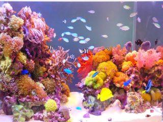海水魚・淡水魚水槽の美しいレイアウト事例25選!