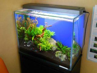 熱帯魚用水槽の選び方