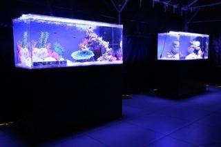 熱帯魚水槽には蛍光灯かLEDか!?アクアリウム照明の選び方
